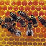 The World Bee Project